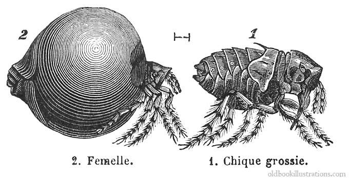 ютуб паразиты в теле человека