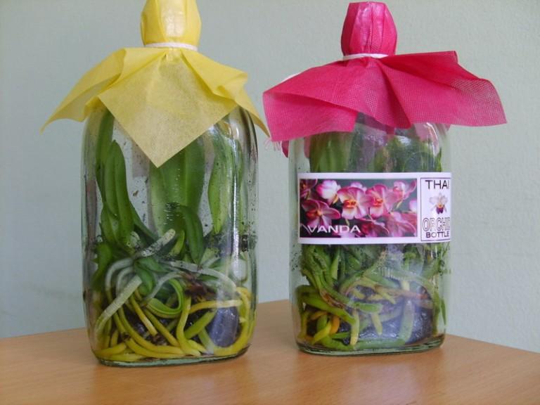 Орхидеи в бутылках из тайланда